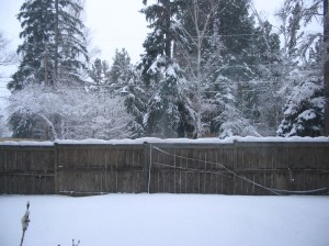 View from my bedroom window on a snowy day in December.