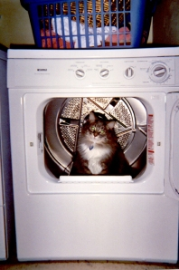 joey-in-dryer-2