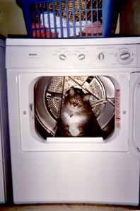 joey-in-dryer-2